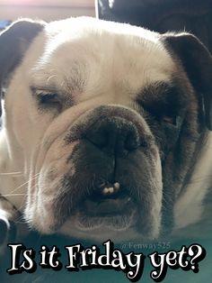 31Jan17 Fenway - Bulldogs - Tuesday - Friday