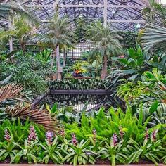 No matter what happens outside this winter the Garfield Park Conservatory will remain lush and verdant inside.
