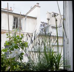 Le Vert à Soi - décoration végétale de fenêtres
