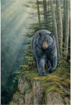 Black Bear (Indoor/Outdoor) Vinyl Wall Mural Wall Mural at AllPosters.com