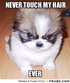 This is sooooooo how i feel this monday grrrrr funny animal quotes, funny animal pictures Funny Animal Jokes, Cute Funny Animals, Funny Dogs, Funny Memes, Silly Meme, Dog Memes, Memes Humor, Funny Looking Animals, Animal Humour