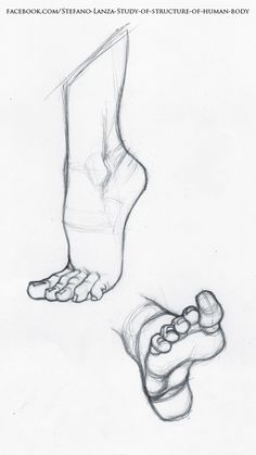 113 best foot anatomy images drawing tips feet drawing sketches Ankle Ligaments and Tendons Diagram security check required