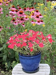 Easy Wave Red petunia growing in container with echinacea in the background