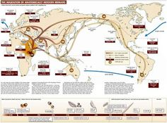 Human Migration History Map - Start gathering all your extended family knowledge and get it online in an unbelievable program, so your relatives and descendants can see it all Mitochondrial Eve, Human Geography, See World, Early Humans, Human Evolution, Out Of Africa, Africa Map, South Africa, Historical Maps