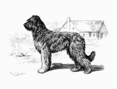 http://stockdogsavvy.wordpress.com/2010/01/20/briard-and-beauceron/