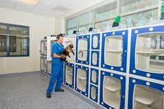 Shor-Line Cat Condos in Long Animal Hospital, Charlotte, North Carolina.