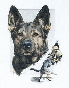 Image Result For German Shepherd Sketch German Shepherd Artwork Police K9 German Shepherd Art