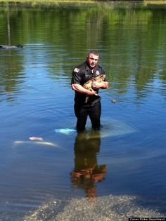 Carver, Mass., police officer dives into a lake to rescue a dog trapped in a submerged truck. Everyone's okay: officer, dog and owner. Would you do the same?