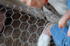 She wraps chicken wire around in a circle and a few steps later.I LOVE this garden idea! Chicken wire cloches are easy to make. They just take a little time and patience. They are great for protecting plants in the garden from visiting critters. Chicken Wraps, Chicken Wire, Chest Of Drawers Makeover, Old Tables, Old Lamp Shades, Faux Wood Beams, Modern Plant Stand, Garden Globes, Front Door Makeover