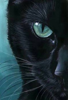 black Cat Portrait - Turquoise Eyes by art-it-art. on - Artistic cats - Katzen / Cat I Love Cats, Crazy Cats, Cute Cats, Art It, Black Cat Art, Black Cats, Black Cat Drawing, Black Cat Painting, Black Cat Eyes