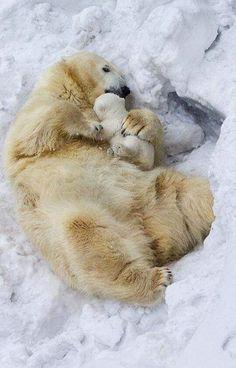 Bear Necessities...