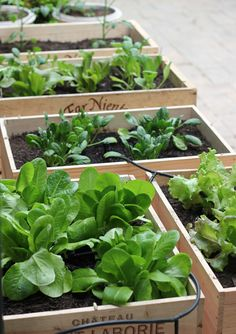 How to grow vegetables and herbs without having a garden