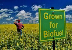 Hemp Biofuels to Save The World