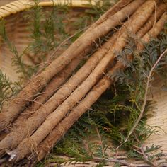 Do you know what burdock roots is? It has so many benefits for our beauty! Check our site link in bio;) #canadabeauty #バンクーバー #vancouver #beautyblogger #veggies #asianbeauty #japanese #canada #tea