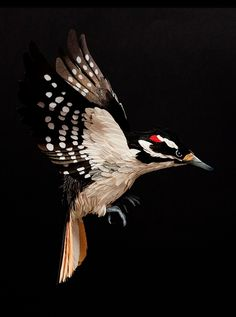 DIANA BELTRAN HERRERA : Columbian artist who makes amazingly life-like and life size birds from sheets of paper. Shown here, the Hairy Woodpecker.