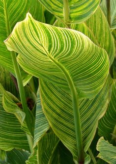 Gorgeous colour and line pattern found in nature