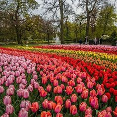 Bucket list moment  Keukenhof Tulips Garden - Holland  Picture by @cbezerraphotos : @wonderful_places #crossfit #crossfitgirls #crossfitgames #bodybuilding #bodybuildingmotivation #bodybuildinglifestyle #lift #weights #yoga #yogagram #yogapose #running #run #runner #instarun #instarunners #fit #fitness #fitstagram #fitfam #fitspiration #workout #wotd #wod #instafit #exercise #photooftheday #me #fashion #style #Landscapes #Landscapephotography #Nature #Travel #photography #pictureoftheday…