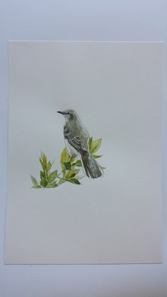 Original watercolour drawing of mockingbird by TheCrowsFeet
