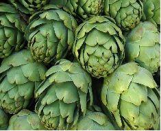 Birçoğumuzun pek de sevmediği bir sebze olan enginar, karaciğer yağlanmasından Hepatit A, B ve C riskini azaltmasına kadar birçok önemli yarar sağlıyor. Sık, sık yemeklerde kullanılan enginar birçok bitkisel ürün içerisinde artık sağlığa olan yararları nedeniyle kullanılmaya başlandı.