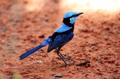 15 Birds photography