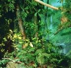 Lianhuachih broad-leaved forest In 1994 I hiked Mt Nanhu and explored all the regions of Taiwan to head up the fabrication and shipment of dioramas depicting the island's native plants and regions.