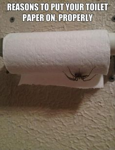 I fucking HATE spiders and I usually don't pin anything dealing with them, but this picture makes a damn good point...
