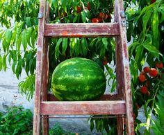 Watermelon Mimosas - http://ecoweare.mywikaniko.com/2016/07/watermelon-mimosas/