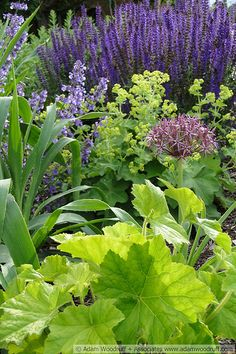 Beautiful herbaceous border | by Adam Woodruff, via Flickr