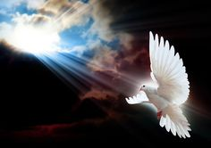 Ailes – Colombe – Oiseau blanc – Plumes – Rayon de soleil