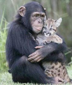 monkey hugging a feline