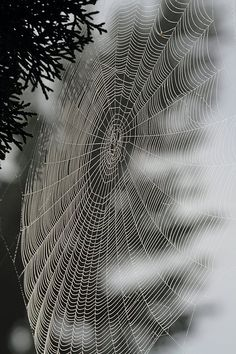 Spider Web Artist by Angie Vogel Spider Silk, Spider Art, Spider Webs, Itsy Bitsy Spider, Amazing Spider, Art Photography, Levitation Photography, Exposure Photography, Winter Photography