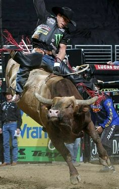 Bull Riding Quotes, Taurus Bull, Rodeo Events, Rodeo Time, Weapon Storage, 8 Seconds, Rodeo Cowboys, Bull Riders, Gladiators