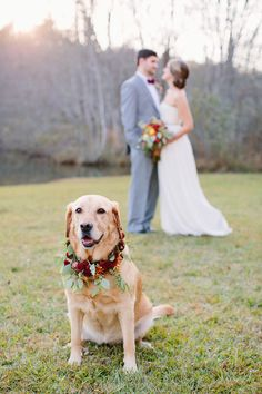 Even the pup needs wedding day florals! #dog #wreath | Photography: http://theredflystudio.com | Floral Design: www.twigsleavesflowers.com