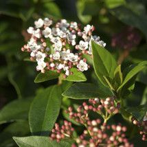 Plant Finder   Use Our Plant Finder Tool To Find Your Perfect Plant