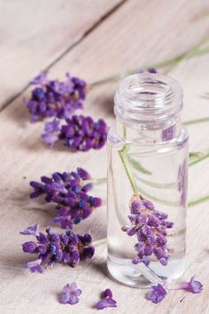 Make your Own Lavender Solid Perfume - http://thegardeningcook.com/make-your-own-lavender-solid-perfume/