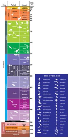 Geologic Time Scale With Animal Pictures Earth Science Lessons, Earth And Space Science, Earth From Space, Life Science, Science And Nature, Science And Technology, Science Geek, Science Classroom, Classroom Ideas