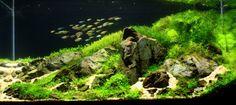 Aquarium Size W90×D45×H45(cm)