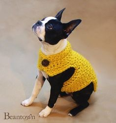 Oh my goodness!  My heart hurts with all this cuteness!  Crocheted Dog Sweater from BeanTownHandmade on Etsy. My, what a handsome little chap he is in his little sweater!