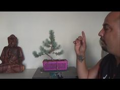 Bonsai Zero Pino - Desalambrado - YouTube