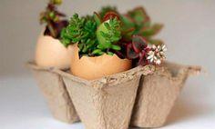 8 maneiras criativas de reutilizar casca de ovo