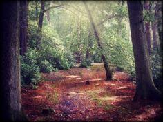 Stover Woods, Devon, England (by Tracey Stephens) Devon England, Woods, Travel Destinations, Places To Visit, Country Roads, Landscape, Plants, Spaces, Road Trip Destinations