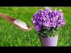 Ella hecho bicarbonato en sus plantas del jardín, lo que sucedió en 1 minuto es algo increíble - YouTube