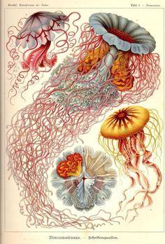 Thanksbeautiful biology illustrations. awesome pin