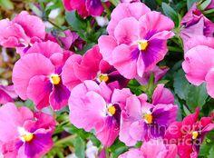Flowers - Andrea Anderegg #flowers