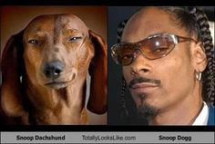 Cute And Funny Dachshund | Snoop Dachshund and Snoop Dogg