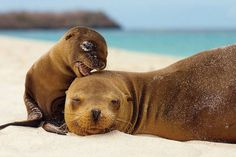 50 Parents From The Animal Kingdom And Their Adorable Kids Cute Creatures, Sea Creatures, Beautiful Creatures, Animals Beautiful, Animals Amazing, Animal Kingdom, Cute Baby Animals, Funny Animals, Animal Babies