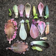 succulent garden care Complete propagation guide for your succulents are in this page! Propagating Succulents, Plants, Growing Succulents, Cactus Garden, Propagating Plants, Plant Care, Succulent Landscaping, Garden Plants, Garden Care