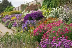 The herbaceous borders at Waterperry Gardens in Oxfordshire, England give an outstanding late summer display (these photos were taken in early October).  Their displays of asters are one of the best in the country.  ©  2014 ukgardenphotos