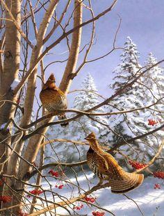 David Maass (American, b. Wildlife Paintings, Wildlife Art, Animal Paintings, Ontario Birds, Grouse Hunting, Hunting Art, Hunting Birds, Game Birds, Bird Pictures
