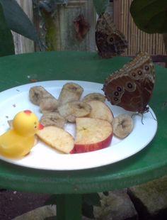 Nach dem Besuch im Schmetterlingshaus weiß ich jetzt, was diese Falter so essen.